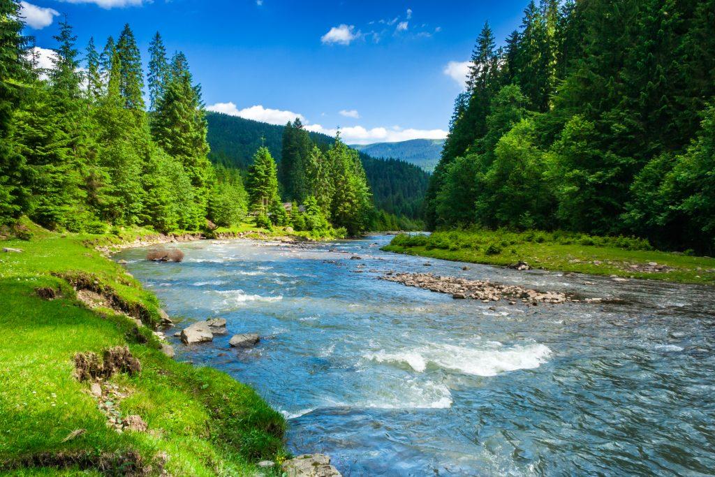 Das Bild zeigt die Natur.