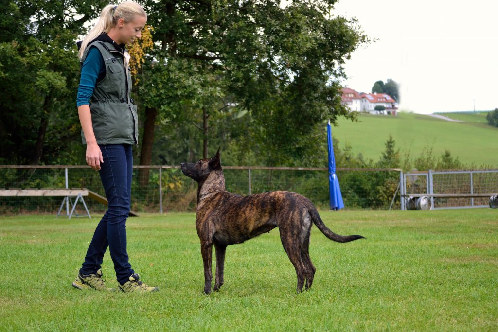 Reico Vertriebspartner als Hundeschule
